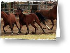 Horse Play Painting  Greeting Card