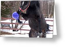 Horse Playing Ball Greeting Card