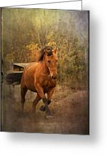 Horse Power Greeting Card