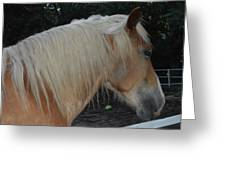 Horse Profile Greeting Card by Cim Paddock