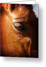 Horse Profile Greeting Card