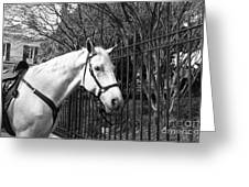 Horse Profile Mono Greeting Card