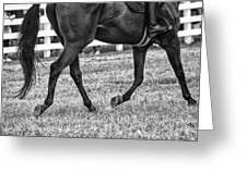 Horse Stepping Greeting Card