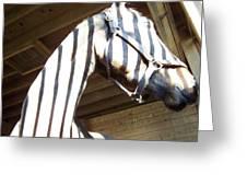 Horse Stripes Greeting Card