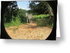 Horse Walks Toward Camera Greeting Card