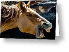 Horse Yawn Greeting Card