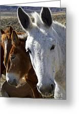 Horses And Mules   #0757 Greeting Card