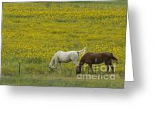 Horses And Wildflowers   #8511 Greeting Card