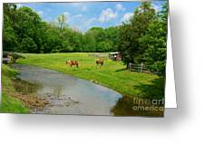 Horses At Home On The Range Greeting Card