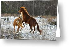Horses At Play - 10dec5690b Greeting Card by Paul Lyndon Phillips