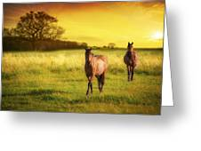 Horses At Sunset Greeting Card