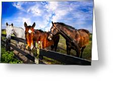 Horses At The Fence Greeting Card