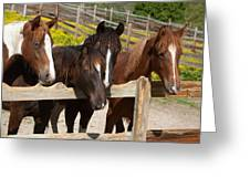 Horses Behind A Fence Greeting Card