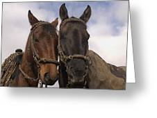 Horses  Belonging To Chagras Ecuador Greeting Card