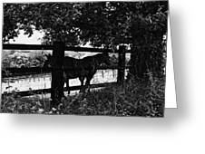Horses By The Fence Greeting Card