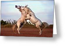 Horses Fighting Greeting Card