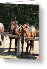 Horses Glacier National Park Montana Greeting Card