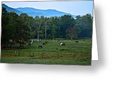 Horses Graze At Dawn Greeting Card