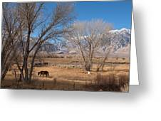 Horses Graze Beside The Owens River Near Bishop Greeting Card