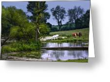 Horses Grazing At Water's Edge Greeting Card
