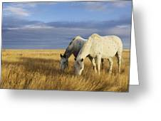 Horses Grazing In Cypress Hills Greeting Card