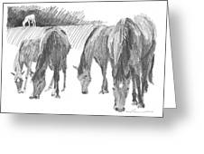 Horses Grazing Pencil Portrait Greeting Card