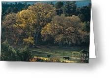 Horses In A Backlit Field With Fall Colored Trees Sedo Greeting Card