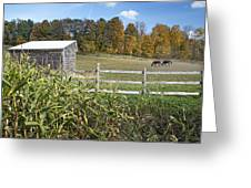 Horses In Autumn Pasture Greeting Card