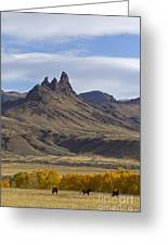 Horses In Fall Colors   #0371 Greeting Card
