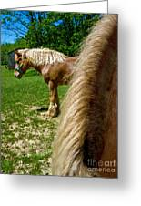 Horses In Meadow Greeting Card