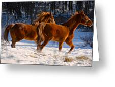 Horses In Motion Greeting Card