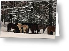 Horses In Snow Greeting Card by Tanya Jacobson-Smith