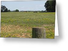 Horses In The Field Greeting Card
