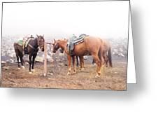 Horses In The Mist - Haleakala Greeting Card