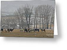 Horses In The Snow   #7940 Greeting Card