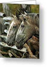 Horses Looking Through The Fence Greeting Card