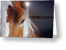 Horses  Greeting Card
