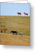 Horses Of Hayward Greeting Card