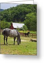 Horses On A Farm Greeting Card