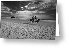 Horses On The Beach Bw Greeting Card