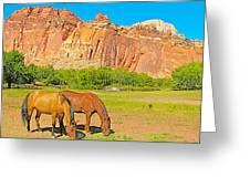 Horses On The Gifford Farm In Fruita In Capitol Reef National Park-utah Greeting Card