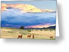 Horses On The Storm 2 Greeting Card
