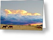 Horses On The Storm Greeting Card