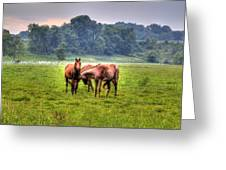 Horses Socialize Greeting Card