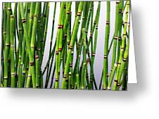 Horsetail Greeting Card