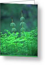 Horsetails Greeting Card