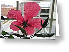 Hospital Hibiscus Greeting Card
