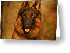 Hoss - German Shepherd Dog Greeting Card