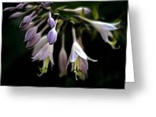 Hosta Petals Greeting Card