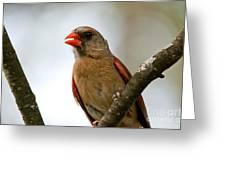 Hot Cardinal Greeting Card